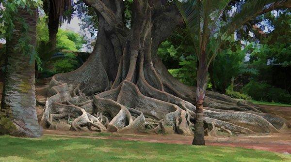 Roots in a garden in Ponta Delgada